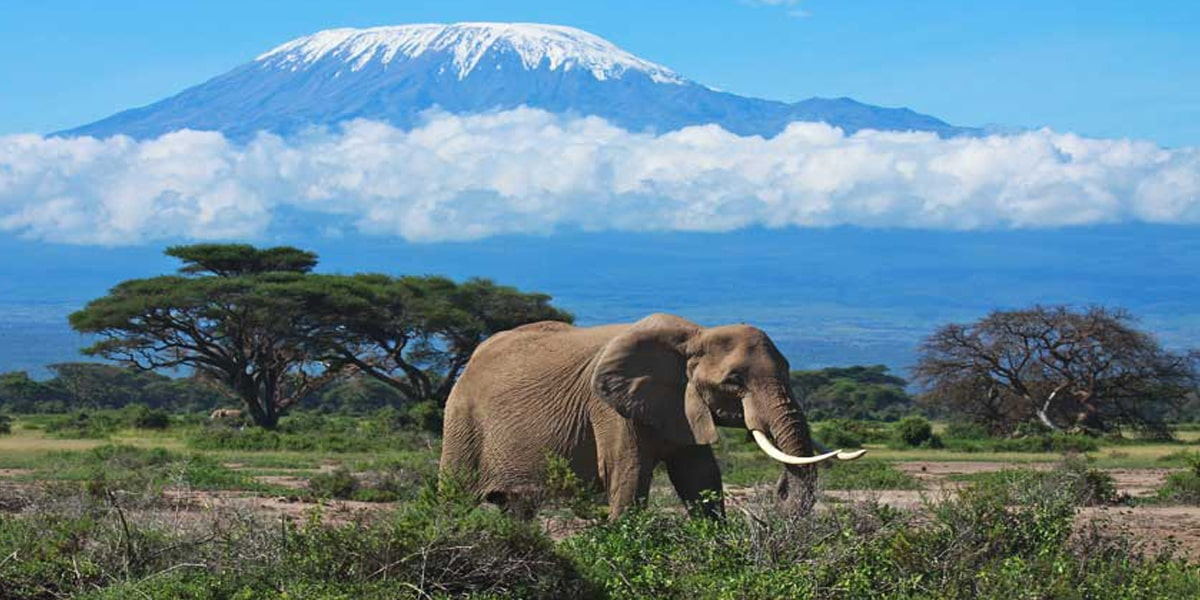 Mount Kilimanjaro Expedition - Affrica |  2021